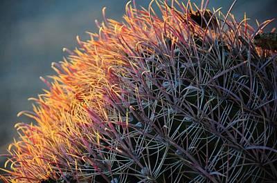 Pink Prickly Cactus Poster
