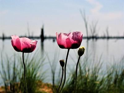 Poppies On Lake Mulwala 2 Poster