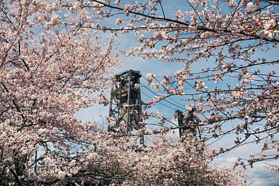 Portland Cherry Blossoms Poster
