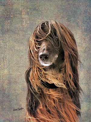 Portrait Of An Afghan Hound Poster