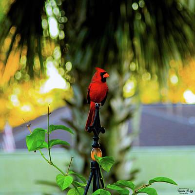 Proud Male Cardinal Poster