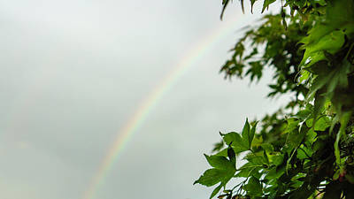 Rainbow With Leaves In Foreground Poster