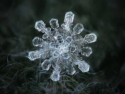 Poster featuring the photograph Real Snowflake - 04-feb-2018 - 1 by Alexey Kljatov