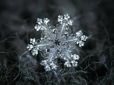 Poster featuring the photograph Real Snowflake - 26-dec-2018 - 1 by Alexey Kljatov