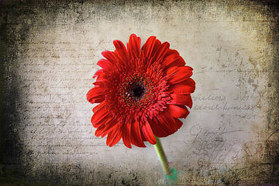 Poster featuring the photograph Red Gerbera by Milena Ilieva