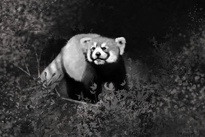 Poster featuring the digital art Red Panda by Angela Murdock
