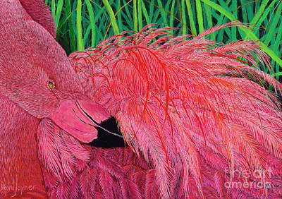 Ruffled Flamingo Poster