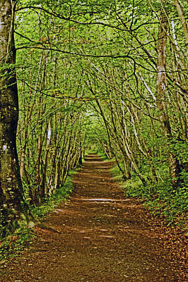 Scotland. Killiecrankie. Path Through The Trees. Poster