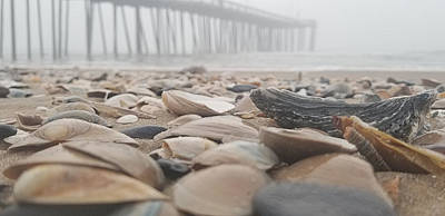 Poster featuring the photograph Seashells At The Pier by Robert Banach