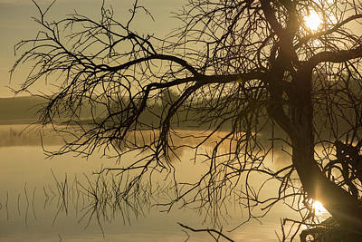 Silhouette Of A Tree By The River At Sunrise Poster