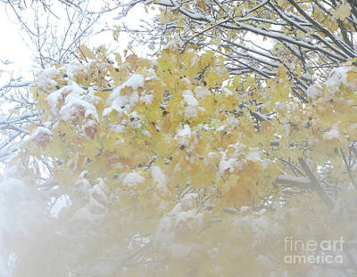 Poster featuring the photograph Snowy Maple by PJ Boylan