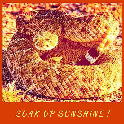 Soak Up Sunshine Poster