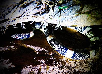 Poster featuring the photograph Sonoran Desert Longnosed Snake by Judy Kennedy