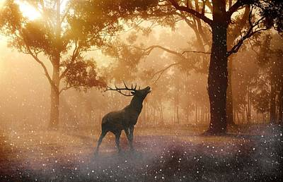 Stag In The Forest Poster