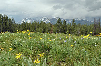 Stormy Tetons And Flowers Poster