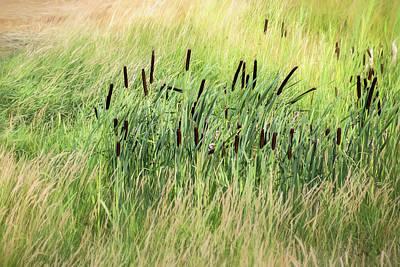 Summer Cattails In Field Of Grass - Poster
