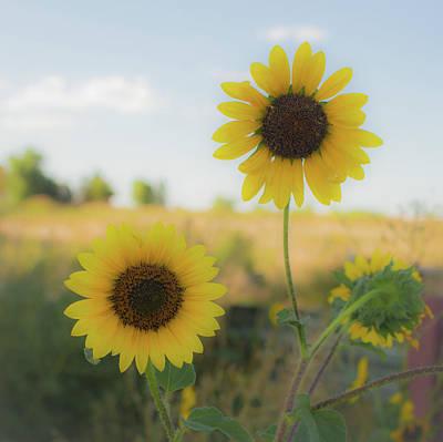 Summer Softness Poster