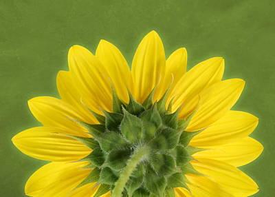 Poster featuring the photograph Sunflower Sunrise - Botanical Art by Debi Dalio