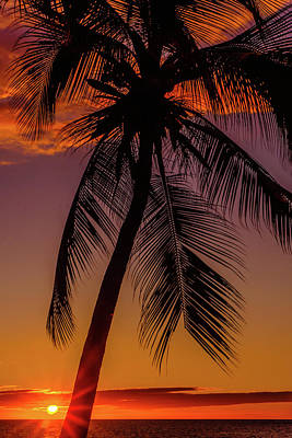 Sunset At The Palm Poster