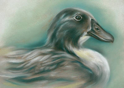 Poster featuring the pastel Swedish Blue Duck by MM Anderson