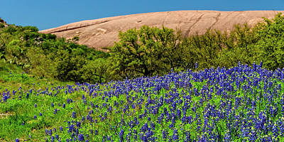 Texas Bluebonnets And Enchanted Rock 2016 Poster