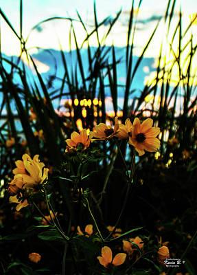 The Sunflower's Sunset Poster