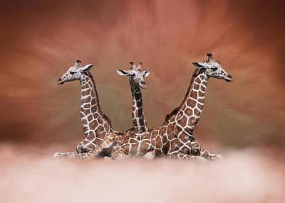 Poster featuring the digital art The Watchers - Three Giraffes by Debi Dalio