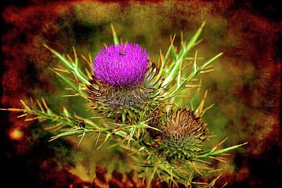 Poster featuring the photograph Thistle Life by Milena Ilieva