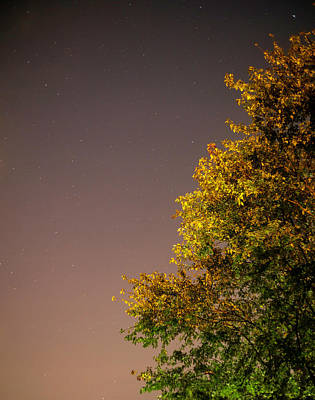 Tree And Stars Poster