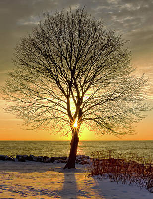 Tree Framed Sunrise New Hampshire Poster