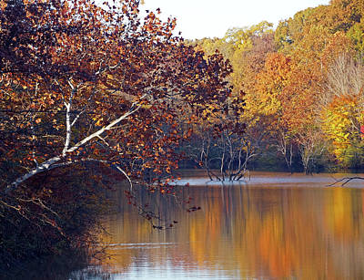 Poster featuring the photograph Trees At The Water's Edge by Mike Murdock