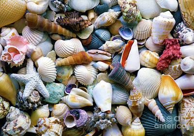 Poster featuring the photograph Tropical Treasure Seashells A91218 by Mas Art Studio