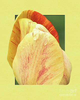 Tulip Petals Escaping Poster