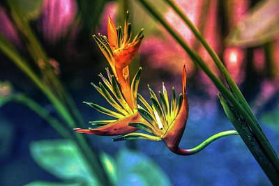 Vibrant Jungle Bird Poster