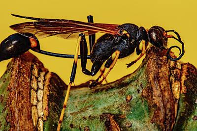 Wasp Just Had Enough Poster