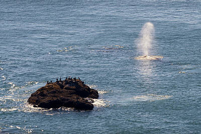 Poster featuring the photograph Whale Watching Yaquina Head Oregonn by Rospotte Photography