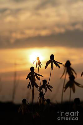Wildflower Sunset Poster