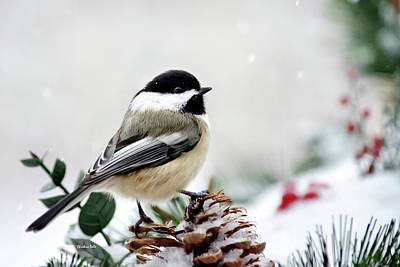 Poster featuring the photograph Winter Chickadee by Christina Rollo