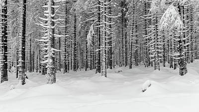 Poster featuring the photograph winter forest, Harz by Andreas Levi