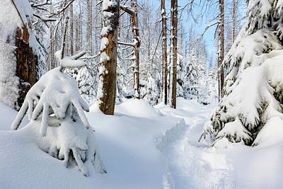 Poster featuring the photograph winter path, Harz by Andreas Levi