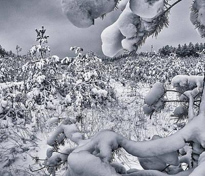 Winter Triumphs. Shchymel, 2018. Poster