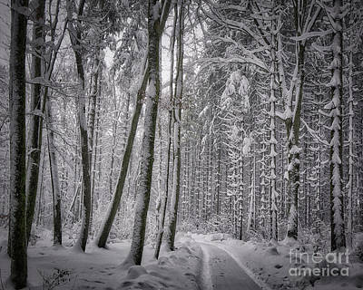 Poster featuring the photograph Wintry Forest Track by Edmund Nagele