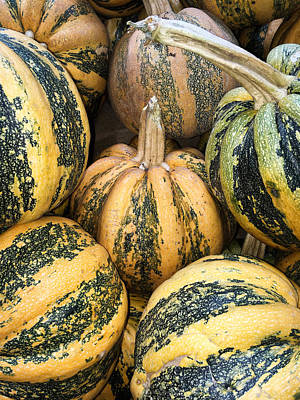 Yellow And Green Pumpkins Poster