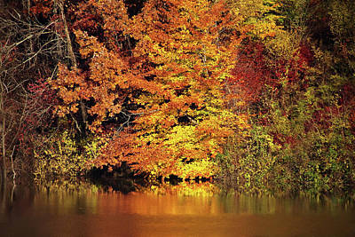 Poster featuring the photograph Yellow Autumn Leaves by Mike Murdock