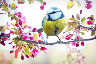 Yellow Blue Bird With Flowers Poster