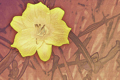 Yellow Day Lily Stencil On Sandstone Poster