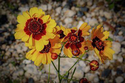 Yellow Wildflowers Poster