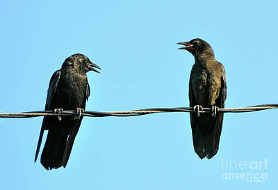 Young Crow Chatting With Mom Poster