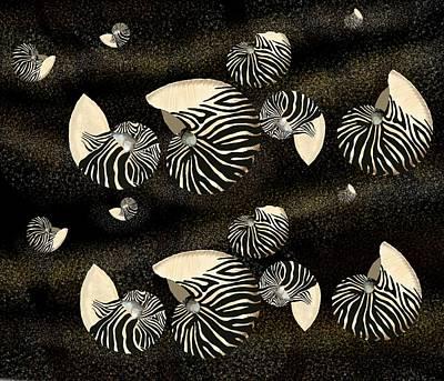 Zebra Pattern Nautilus Shells6 Poster