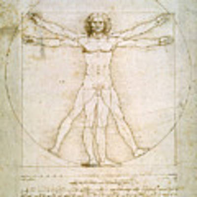 The Proportions Of The Human Figure Poster